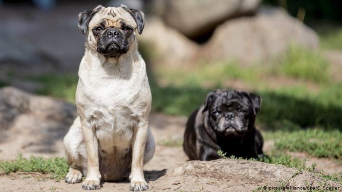 Comercio ilegal de perros en Europa: un negocio millonario