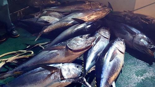 Atunes y tiburones, en peligro: la pérdida de oxígeno en los océanos amenaza la vida marina