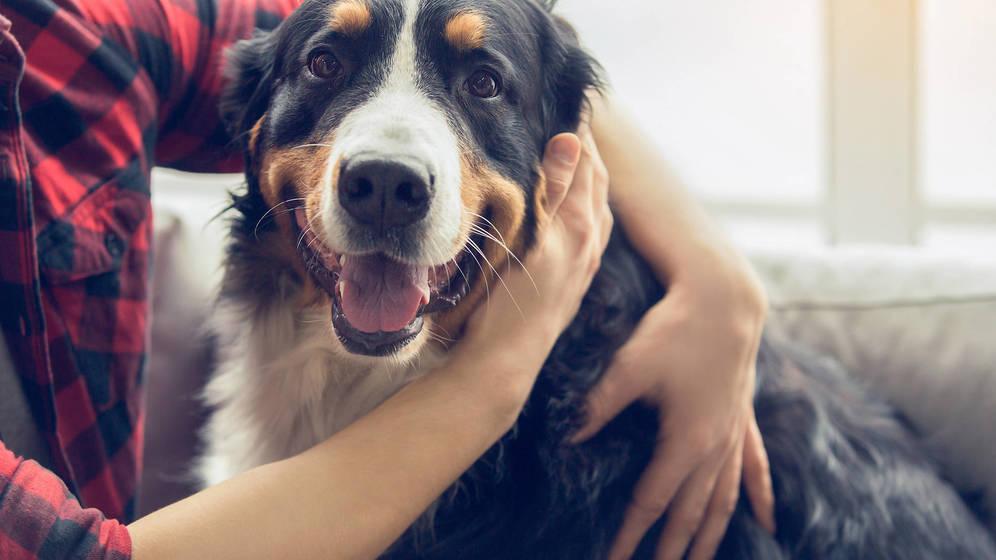 ¿Cómo ven el mundo los perros? Claves para poder entenderlos mejor
